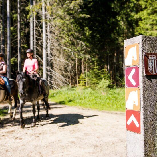 Kurzurlaub mit eigenem Pferd
